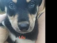 Lilu's story Welcome Lilu! ! These sweet pups are just
