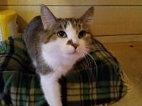 Lily is a sweet girl who arrived at the Cattery as an