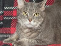 Declawed Adult Cat  Lily  Needs a Home.   Lily is a
