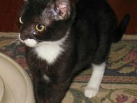 Lily Age: 4 Months Old DSH/Female She is up for foster