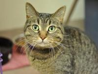 Lily's story I am a sweetheart who loves pets and