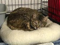 Lily's story I am a beautiful 8 yrs young spayed