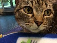 Lily's story Primary Color: Grey Tabby Secondary Color: