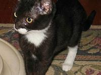 Lily's story Lily Age: 4 Months Old DSH/Female She is
