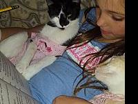 Lily's story Meet Ms Lily, she is a six old kitten with