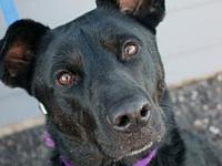 Lily's story   Meet Lily! Lily is a lab mix who