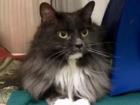 Lily is a gorgeous, sweet, super-affectionate cat who