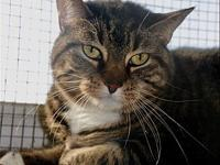 Lily's story Lily is a beautiful girl that was sadly