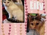 Lily's story Lily is an adorable kitten. She is a true