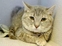 LILY's story ADORABLE GIRL Favorite Things: Head rubs