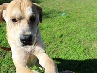 My story The adoption fee is $150.00 which includes