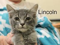 Lincoln's story The adoption fee is $85.00 with an