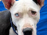 Lincoln's story Lincoln is one handsome guy looking for