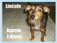 Lincoln's story Please complete our application at: