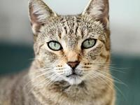 My story Lindalita is a sweet cat who had a litter of