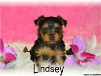 Do you think I'm little? If so, then Hi, I'm Lindsey!
