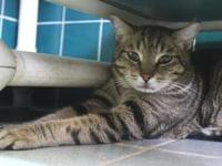 My story I arrived at the shelter as a lost cat. I'm