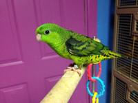 I have 2 baby green Linnies available. They are just