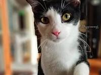 Linus's story Mr. Linus can be a little skittish at