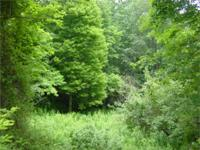 Linville Land Harbor Developed Rv Lot For Sale In Linville