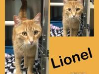 Lionel's story I am a very inquisitive cat that loves