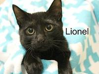 Lionel's story The adoption fee is $85.00 with an