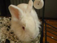 Lionhead - June - Small - Young - Female - Rabbit June