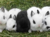 I am looking for a pair or maybe a trio of rabbits. I