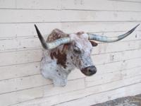 LIQUIDATION AUCTION Hundreds of Taxidermy Mounts &