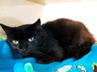 Lisa's story Hi! My name is Lisa. I am 3 years old and