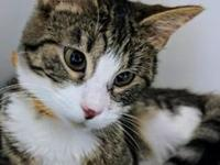 Litten's story Litten came to CHA Animal Shelter with