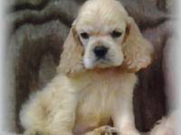 Little Ace is a very sweet & playful little guy. He has