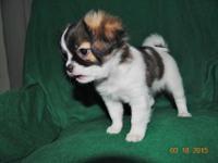 Jolene was born 1/23/2015 . All of her puppy health