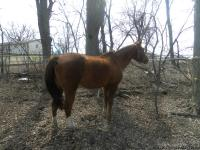 Willing to part with our little childs first horse, she