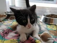 Little Dipper's story I'm a playful kitten looking for