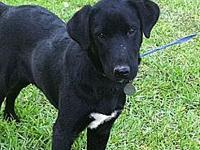 Little Fritter's story Little Fritter is a male lab mix