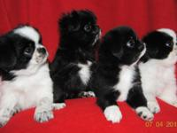 THESE 4 LITTLE WONDERS were born on May 10th, 2015 and