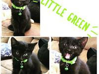 Little Green's story Little Green! This sweet girl just
