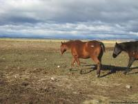 Little Joe is a 13 year old gelding that has been used