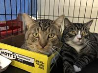 Little M (w/ Big M, FIV+, Positively Adoptable!)'s