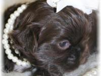Paislee will come AKC (full) registered. Paislee is a