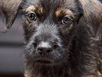 LIttle Scruffy's story To adopt, fill out an