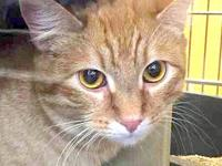 Little Orange's story Sweet ginger who needs a home!