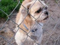 Littleman is around 7 yrs old, loves all people and