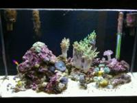 "30 gallon ""LIVE"" salt water fish tank"