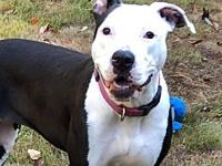 Liza's story Meet Liza, she is a loving and energetic
