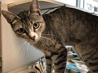 My story I am looking for a quiet home where I can
