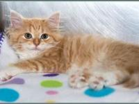 Lizzie's story $97.50 FEE INCLUDES: neutering/spaying,