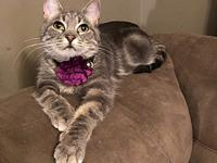 My story This beautiful gray marble tabby is Lizzie!