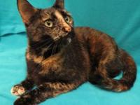 Lizzy's story Pretty Lizzy the torti is still letting